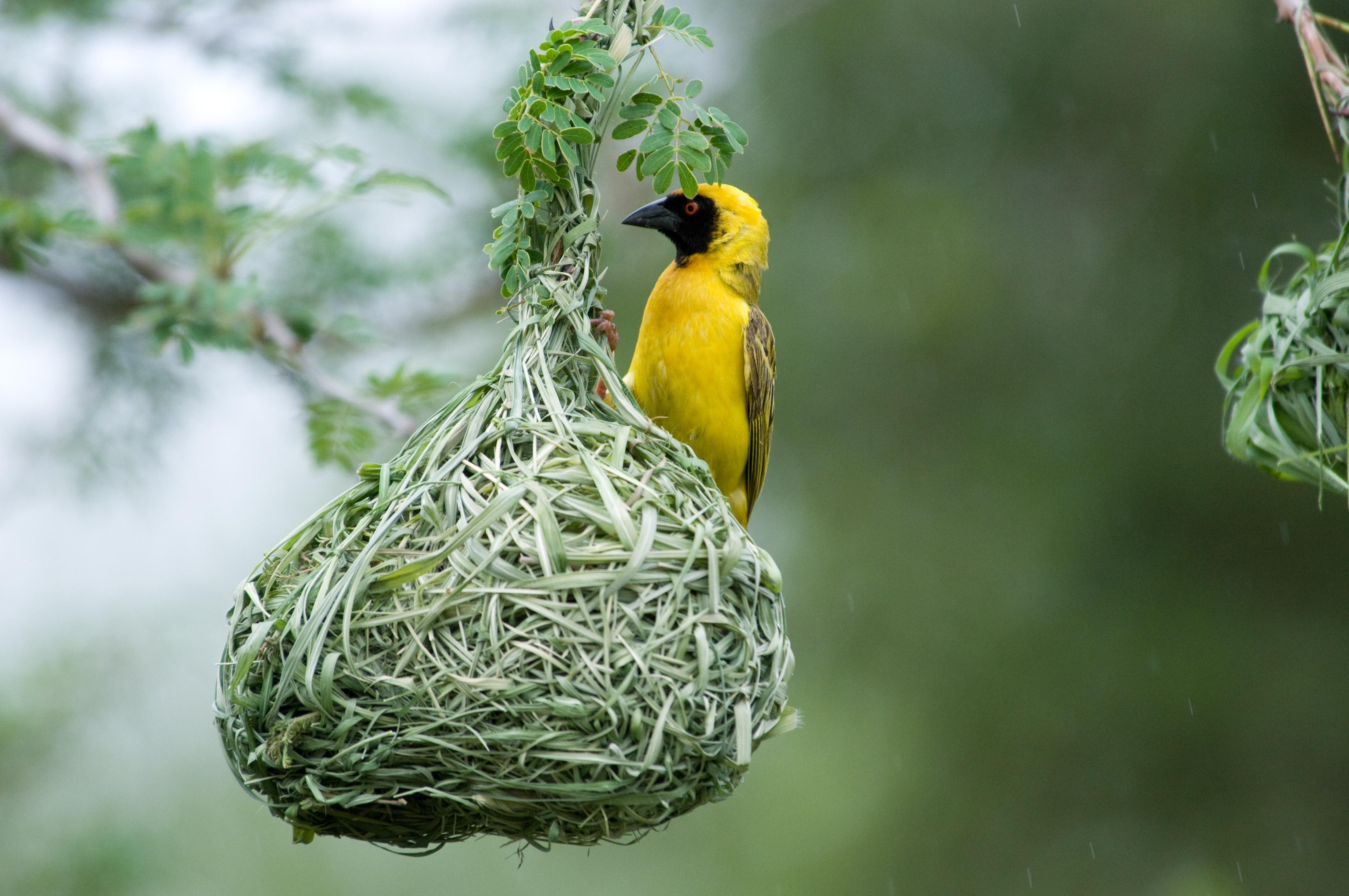 bird-life-at-cedar-storage
